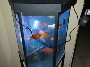 fish with tank